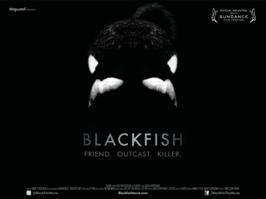 Photo Courtesy of Dogwoof productions. Visit www.blackfishmovie.com for more information regarding orca whales in captivity.