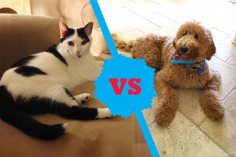 The battle between cats and dogs has been documented in countless cartoons and comic strips