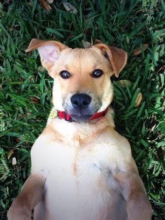 Ashley Martin's dog Jay!