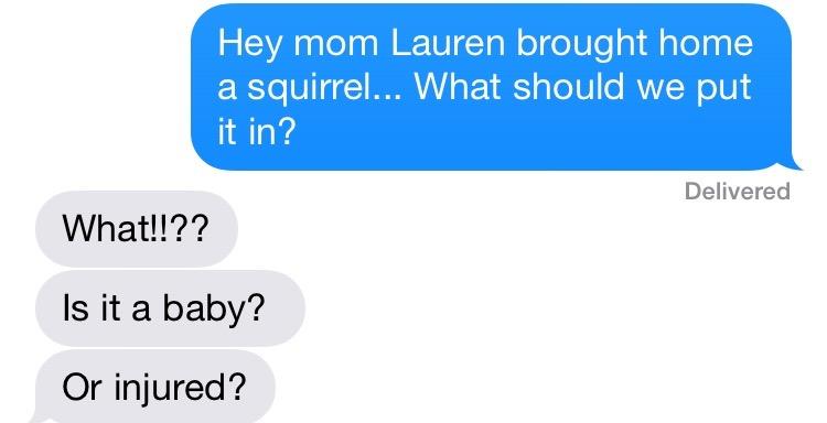 Credit: Lindsey Calka  Pet Squirrel?