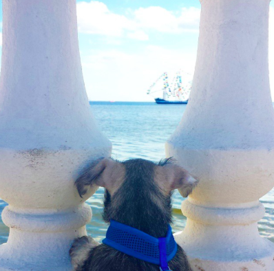 Lincoln Rodriguez enjoying the view from Bayshore. Credit: instagram- @lincolns_bark
