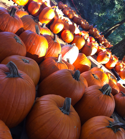 Fall has come, it's time for the fun festivities! Photo credit: Alexis Alvarez / ACHONA Online