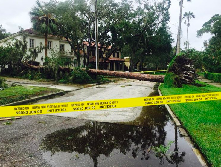 Trees were knocked down by Irma's winds and took down the power lines with them.