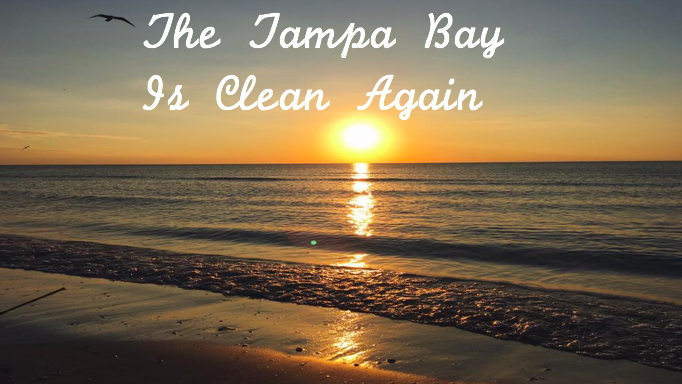 Medium+reported+that+the+Tampa+Bay%27s+rivers+and+creeks+have+been+transformed+into+clean+environments+characterized+by+clear+water%2C+better+fishing%2C+lack+of+harmful+algae+and+chemicals%2C+and+renewed+recreational+access.%0A%28Photo+Credit%3A+Elle+Lehman%2FAchona+Online%29