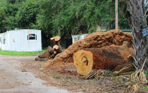 """We actually just saw [an example of this law], unfortunately, on Gandy. An arborist that was allowing the destruction of trees that were in good shape. The issue with that is, you can't fix that. You cannot put grown trees back where they were,"" says Mayor of Tampa, Jane Castor."