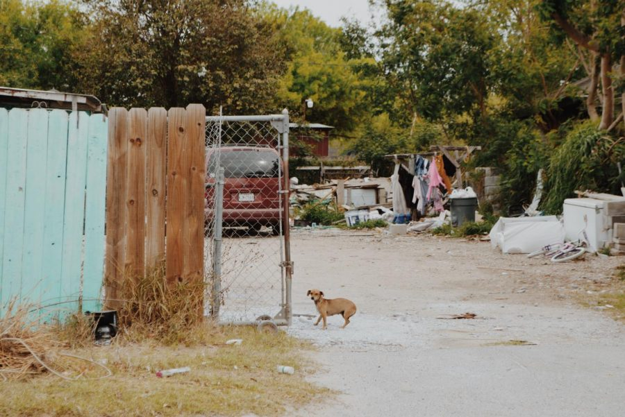 Similar to communities within Central and South America, stray animals lurk along street corners hopeful for either a companion or affection— or perhaps both.