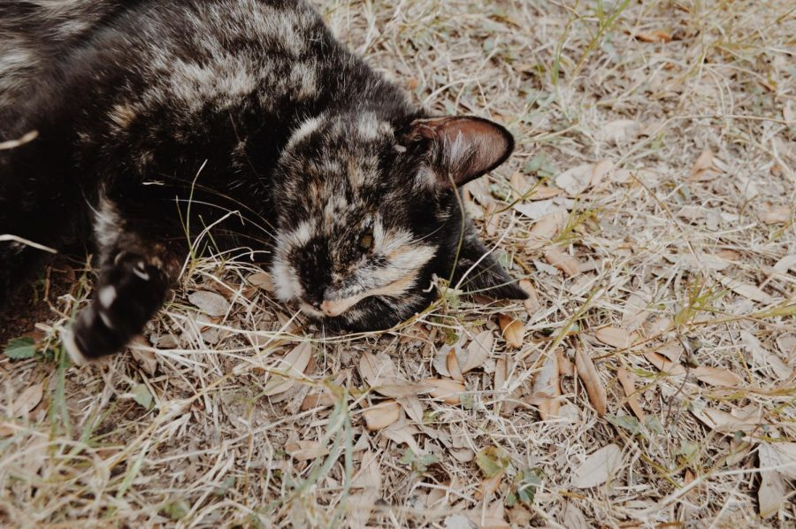 The name Gata (Spanish for female cat) was given to the neighborly cat who frequents the headquarters of Arise.