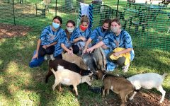 About 20 goats, provided by the Grady Goat Foundation, participated in goat yoga with two groups of seniors.