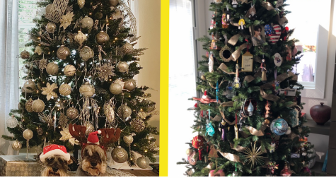 A side-by-side look at two different types of Christmas trees.